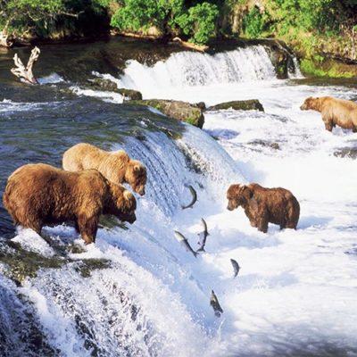 bears-laduc
